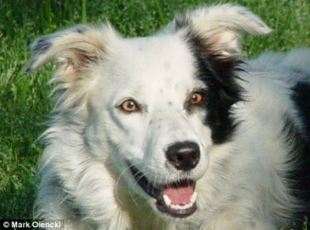 Border collie Chaser has, according to psychologists Alliston Reid and John