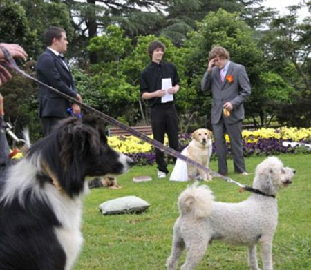 Dog and man wedding